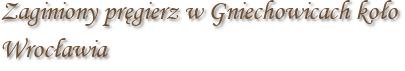 Zaginiony pręgierz w Gniechowicach koło Wrocławia