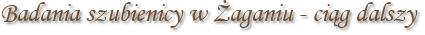 Badania szubienicy w Żaganiu - ciąg dalszy