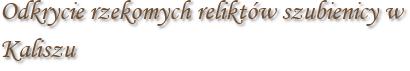 Odkrycie rzekomych reliktów szubienicy w Kaliszu